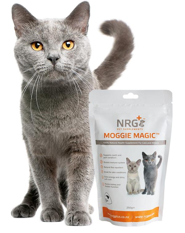NRG Cat food supplement - moggie magic
