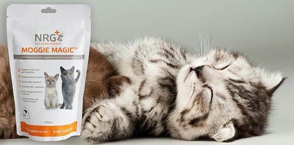 NRG Plus - Moggie Magic - Cat Supplements New Zealand