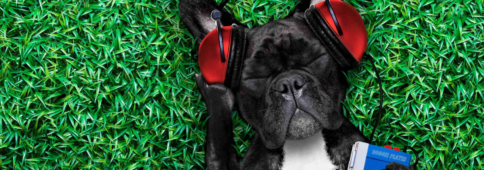 Dog Flu Natural Treatment